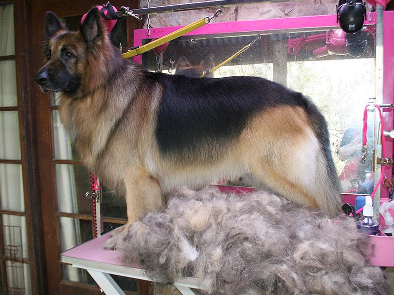 Dog Grooming Salon In The Pink Dog Grooming Salon At